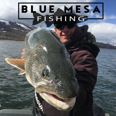 Colorado Fishing report , Blue Mesa Reservoir current fish